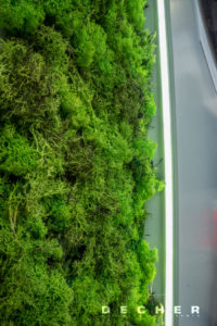 Bau echter Mooswände zur Begrünung von Messen - Decher Mietpflanzen