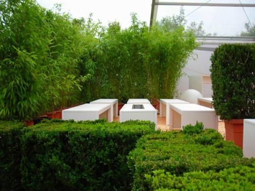 Asiatische Pflanzen